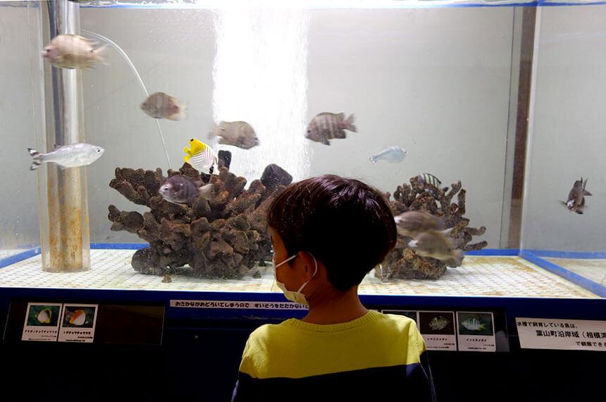 葉山しおさい博物館の水槽を眺める子ども