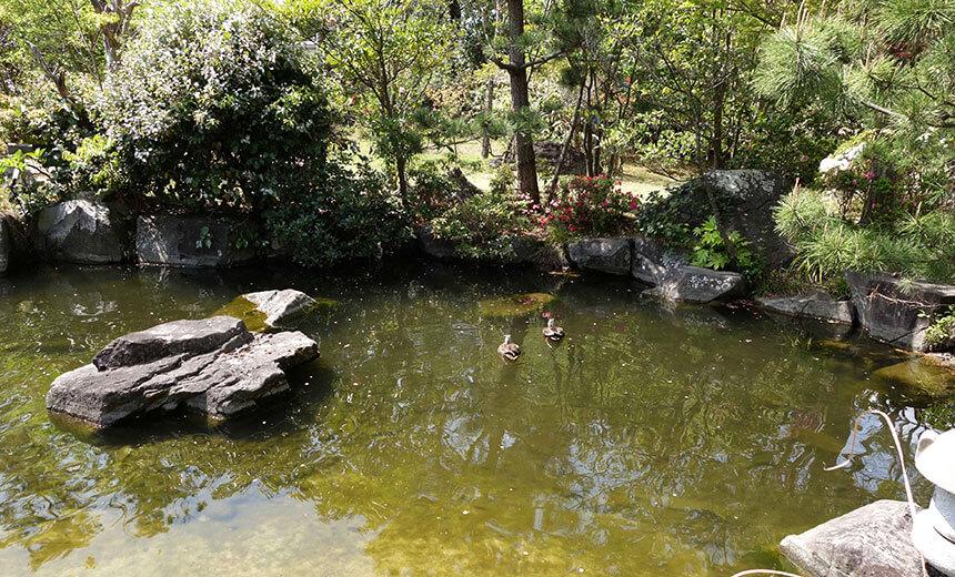 葉山しおさい公園の池