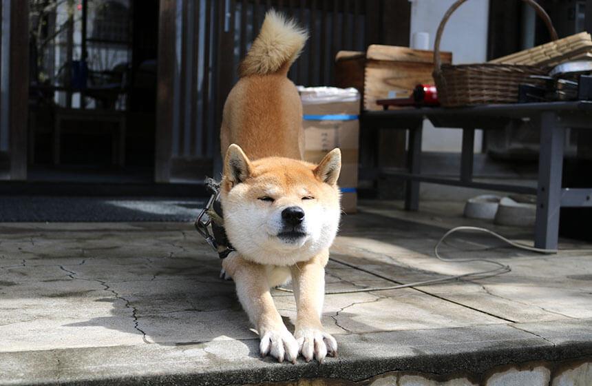 お寺ストレッチを開催する興全寺の看板犬
