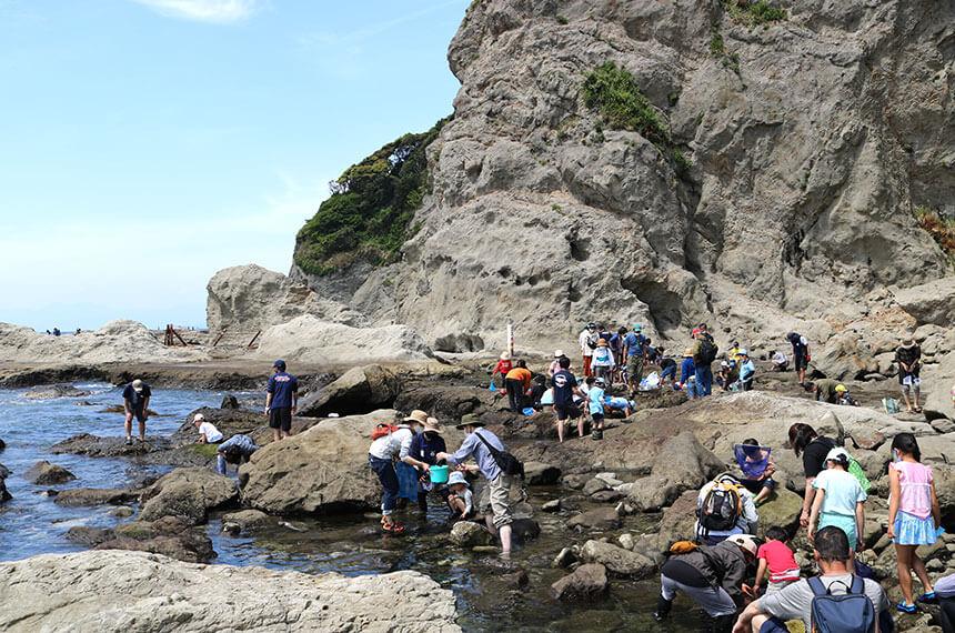 湘南・江ノ島の潮だまり