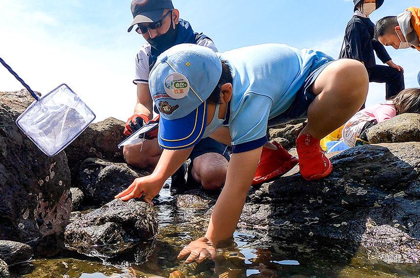 湘南・江ノ島の岩場で海の生き物を探す子ども