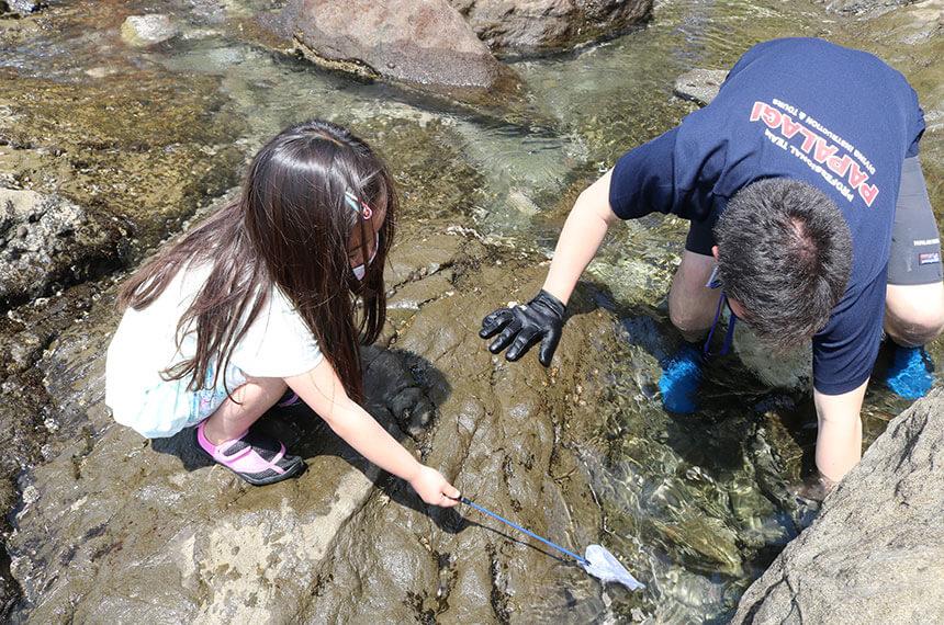 湘南・江ノ島の『海岸生物観察会』で魚を探す子ども