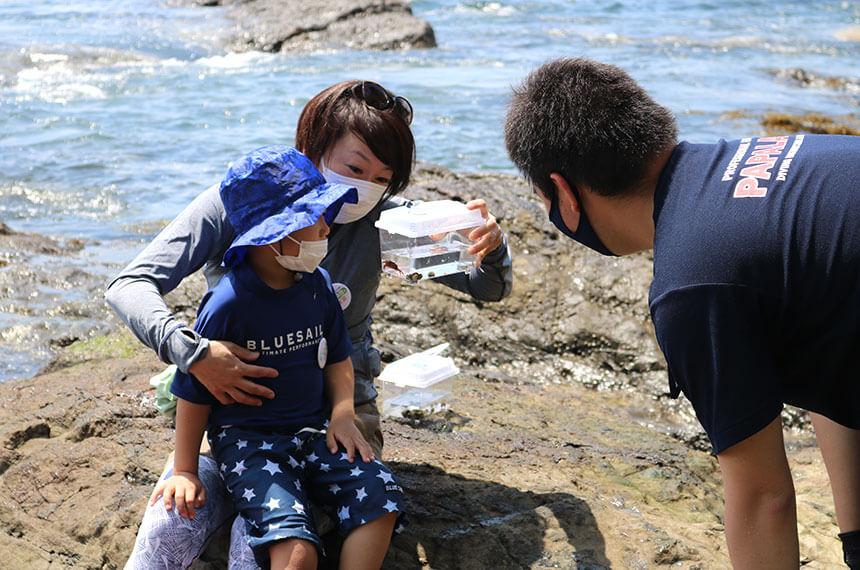 湘南・江ノ島の『海岸生物観察会』に親子で参加