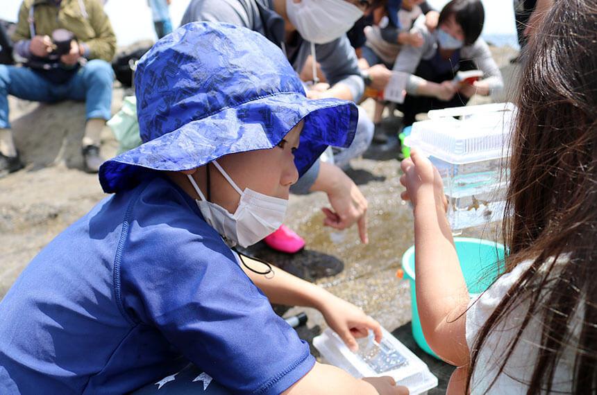 湘南・江ノ島『海岸生物観察会』で海の生き物観察