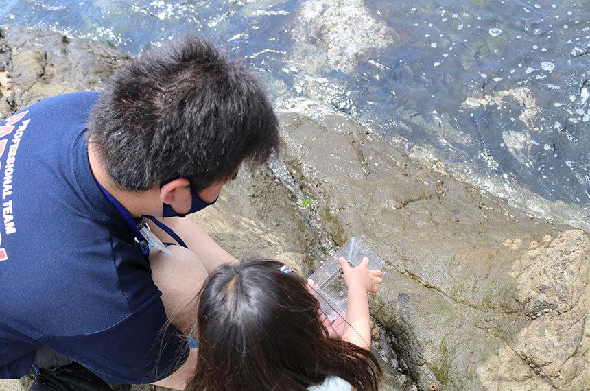 湘南・江ノ島『海岸生物観察会』で観察した海の生き物を海へ帰す