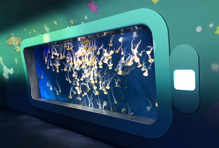 クラゲの水槽「パシフィックシーネットル」