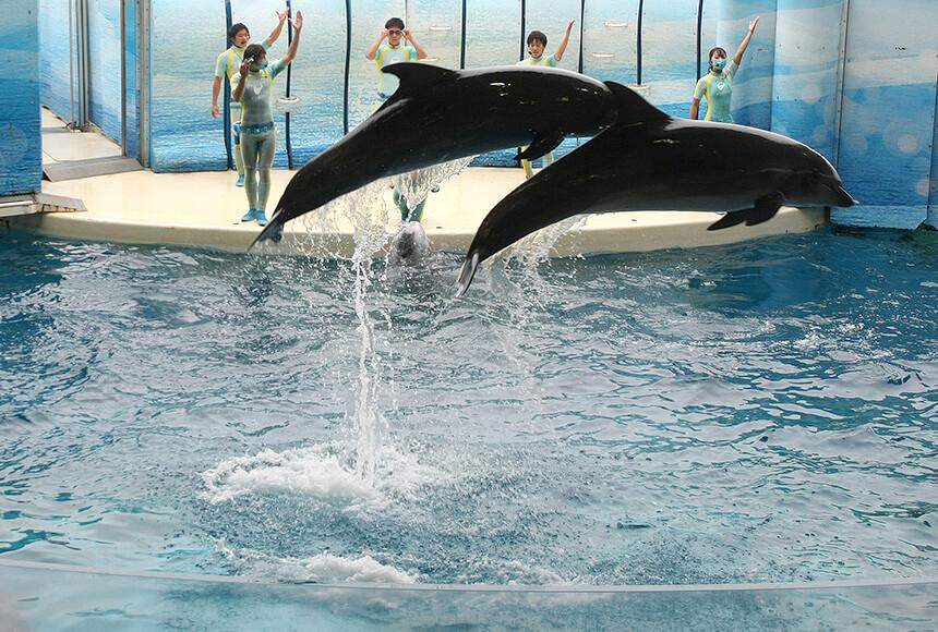 ジャンプする2頭のイルカ