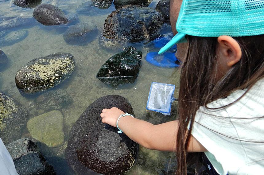 鎌倉「海と自然の教室」に参加する子ども