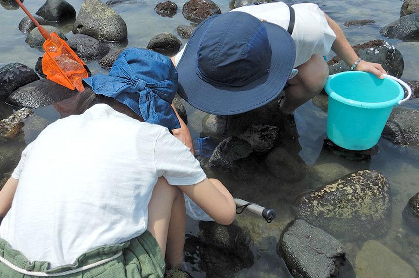 鎌倉「海と自然の教室」で海の生き物観察をする親子