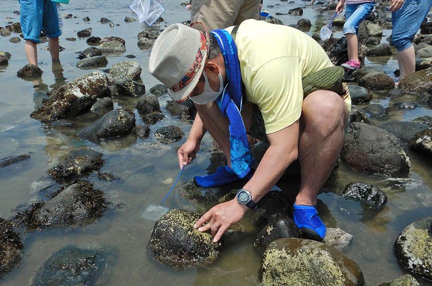 鎌倉「海と自然の教室」で海の生き物観察をするパパ