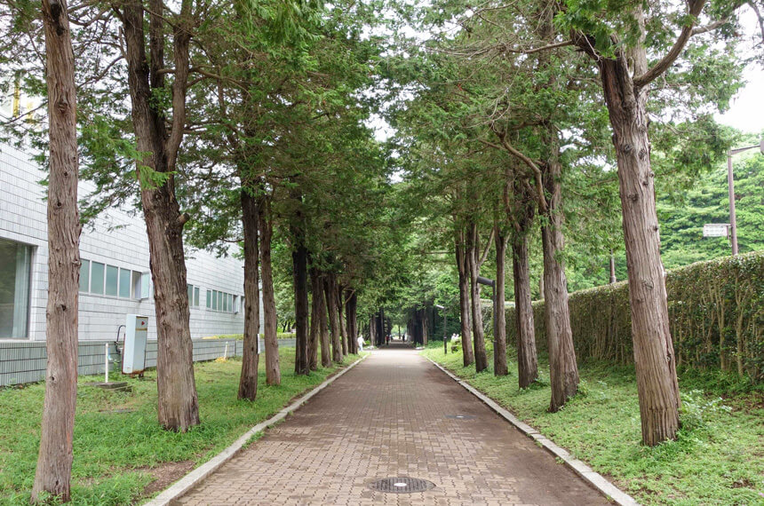 平塚市総合公園の並木道
