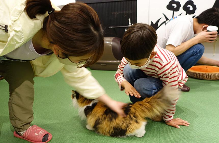 猫のしっぽの付け根を優しくポンポンする子ども