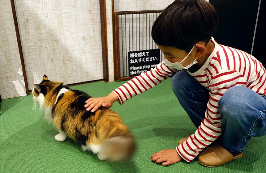 しっぽを振って喜ぶ猫と子ども