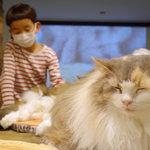 鎌倉『ねこのダヤンと猫の島カフェ』