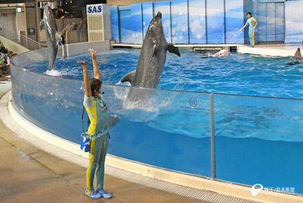 新江ノ島水族館のイルカ・クジラショー