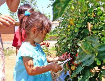 花菜ガーデンのお楽しみ収穫体験