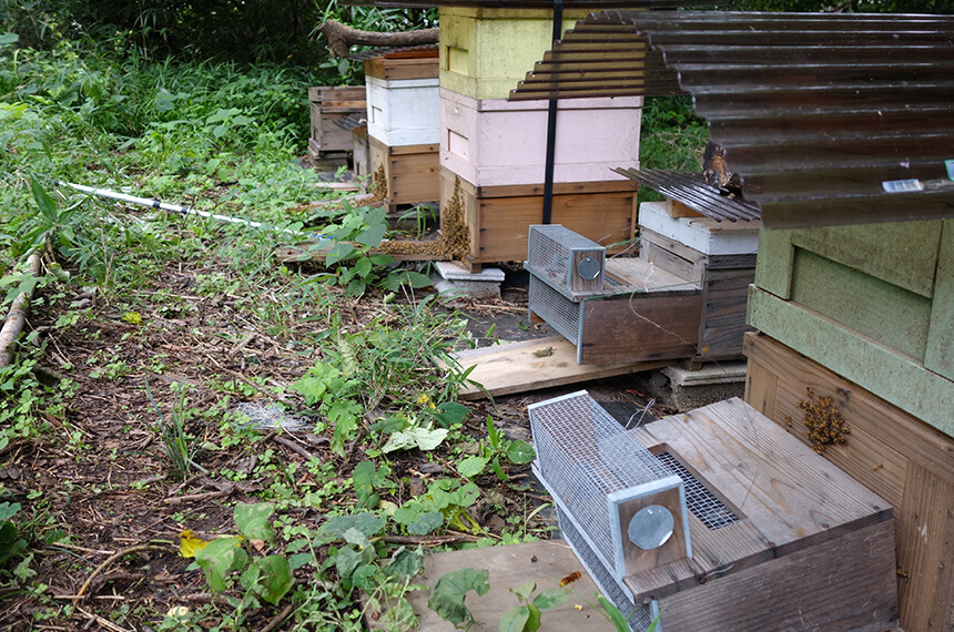 葉山「星山」の山頂部にあるミツバチ養蜂場